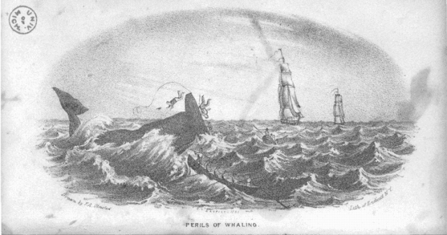 09 - Perils of whaling